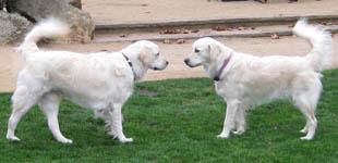 Abby & Luke (Sofie & Oz)