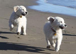 Cooper & Lexi